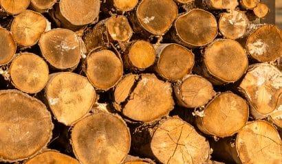 Le bois de chauffage est-il vraiment écolo ?