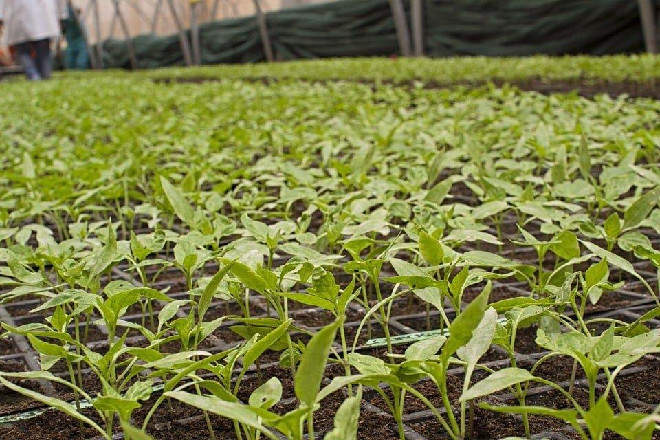 Cultiver la terre avec des méthodes bio