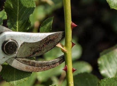 Quels outils pour un jardinier débutant