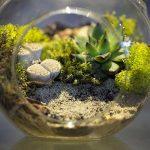 Comment faire un terrarium ?