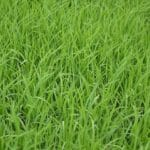 Quelle densité de brin choisir pour sa pelouse synthétique ?